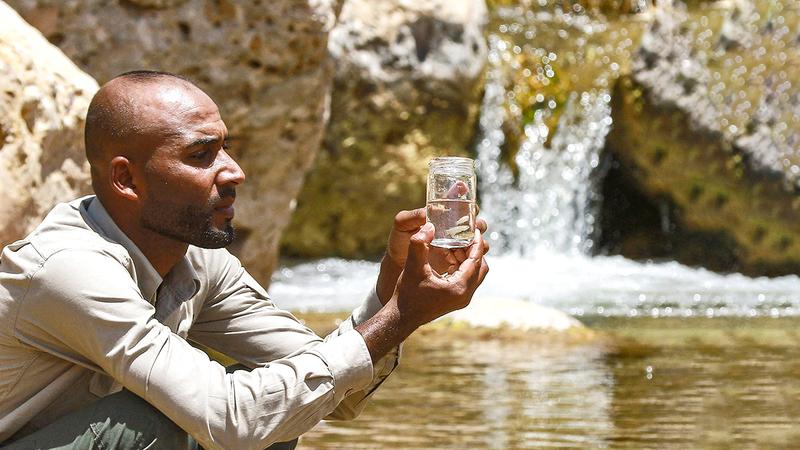 العشوش: الأفانيس يتميز بتحمّل درجات الملوحة العالية للمياه.  أ.ف.ب