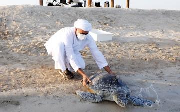 الصورة: على شاطئ الحديريات في أبوظبي.. إطلاق 150 سلحفاة بحرية