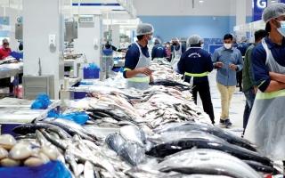 الصورة: «تنفيذي دبي» يعتمد استراتيجية تنظيم صيد الثروة السمكية وحظر الصيد بالألياخ