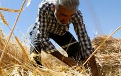 الصورة: الجفاف في سورية يعرّض «عام القمح» للخطر
