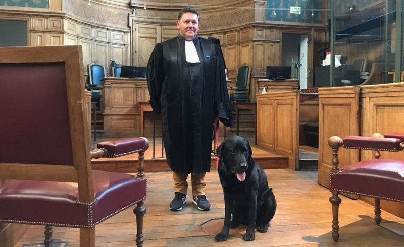 لول هو أول كلب في أوروبا يستعين به القضاء لمساعدة ضحايا الجرائم. (بي بي سي)