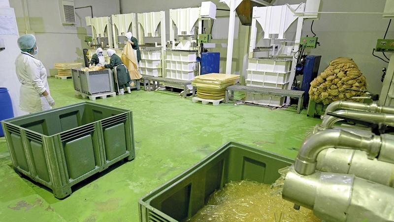 معالجة الطحالب الجافة تتم في المصنع.  أ.ف.ب