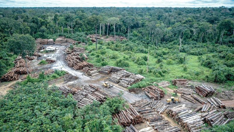 25% زيادة في عمليات إزالة الغابات في الأشهر الخمسة الأولى من العام الجاري مقارنة بالفترة المماثلة من العام الماضي. أرشيفية