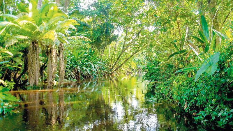 غابات الأمازون المطيرة مصدر للحفاظ على البيئة.  أرشيفية