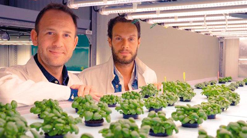 تراهن «جانغل» على إنتاج النبتات لصانعي العطور ومستحضرات التجميل.   أ.ف.ب