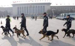 الصورة: الشرطة الصينية تبيع كلاباً بوليسية لأنها «جبانة»
