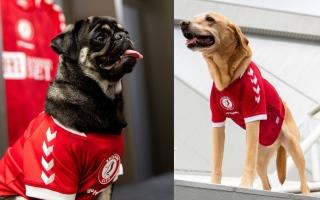 الصورة: كلاب بدلاً من نجوم الفريق للكشف عن القميص الجديد للنادي (فيديو وصور)