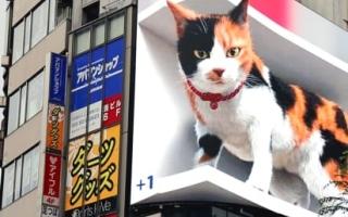 """الصورة: قطّ """"3 دي"""" في طوكيو.. فيديو"""