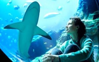 الصورة: أين تذهب في العيد.. «أتلانتس النخلة» في دبي يُقدِّم «أسبوع القرش»