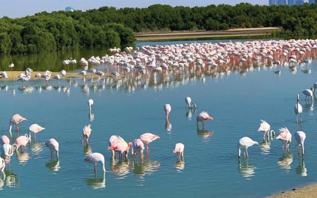 الصورة: بوابة إلكترونية لتقدير أعداد الطيور المائية في العالم