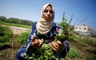 الصورة: نساء من غزة يصنعن أدوات تجميل من الأعشاب المحلية