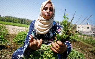الصورة: نساء من غزة يصنعنَ أدوات تجميل من الأعشاب المحلية