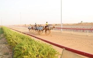 الصورة: مجلس الشارقة الرياضي يستكمل أعمال الإضاءة بميدان سباقات الهجن