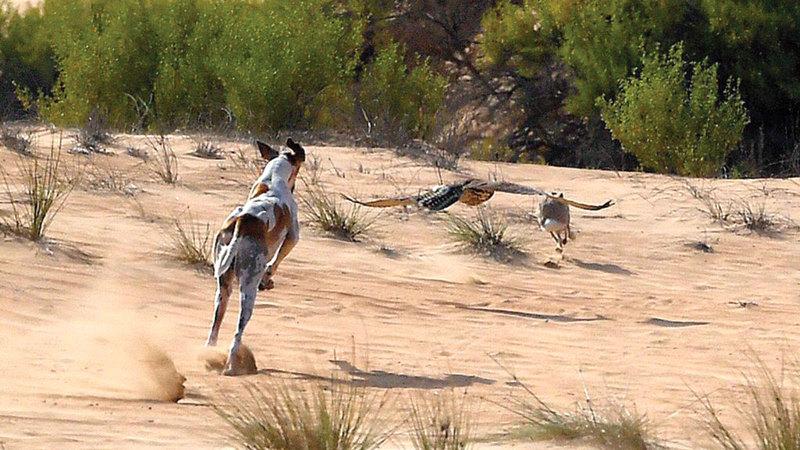 السلوقي من أقدم سلالات كلاب الصيد في العالم ويرجع تاريخياً لما يزيد على 12 ألف سنة.  من المصدر