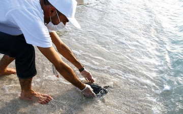 الصورة: 17 سلحفاة بحرية تعود إلى مياه أبوظبي
