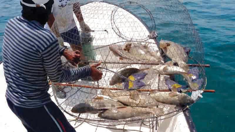 3700 درهم كلفة رحلة الصيد الواحدة متضمنة الوقود وأجرة العمال والنوخذة.   أرشيفية