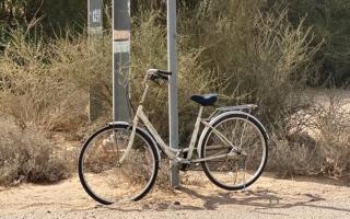 الصورة: لقطة.. دراجات هوائية