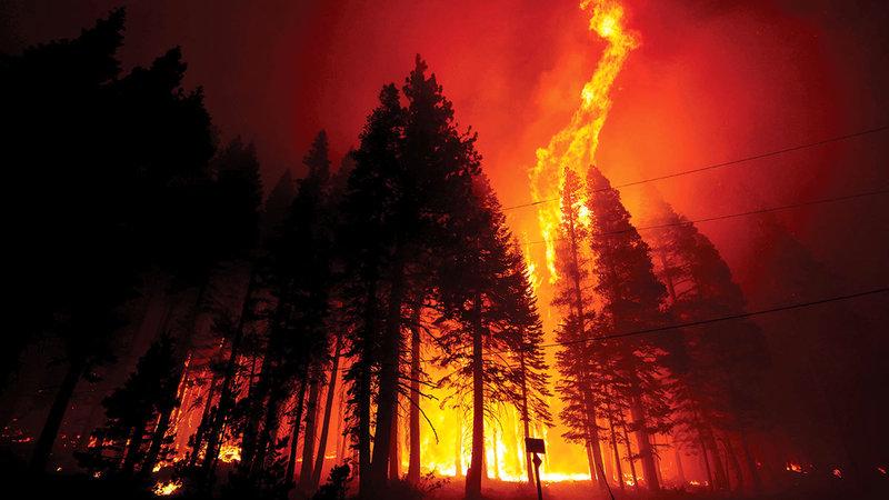 الحرائق تهدّد بعض أنواع الأشجار بالانقراض.   رويترز