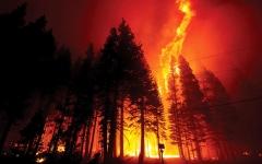 الصورة: أحداث وصور.. 30% من أنواع الأشجار في العالم معرّضة للانقراض