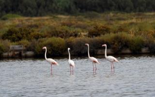 الصورة: طيور متنوعة تزيِن بحيرات فرنسا.. صور