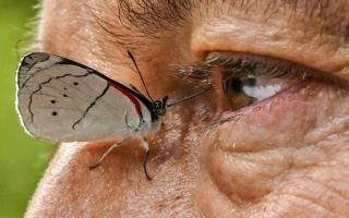 """الصورة: """"""""خوان غييرمو"""" والفراشات الكولومبية"""