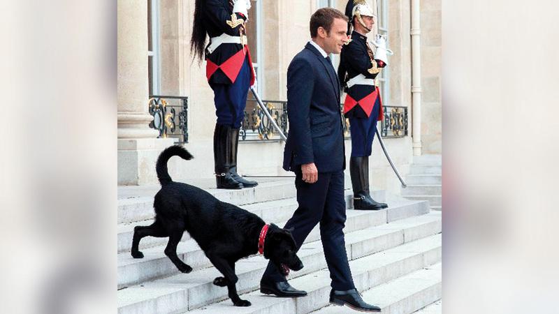ماكرون مع كلبه.  غيتي