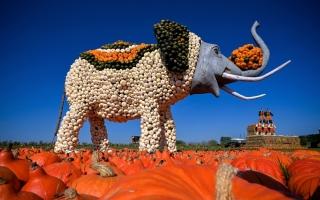 الصورة: مهرجان اليقطين في ألمانيا.. صور