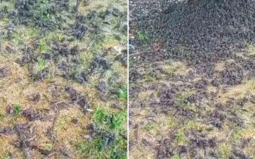 الصورة: مئات الطيور تسقط ميتة من السماء.. والسبب كارثي