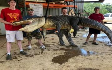 الصورة: مفاجأة عمرها 6000 عام في بطن تمساح ضخم