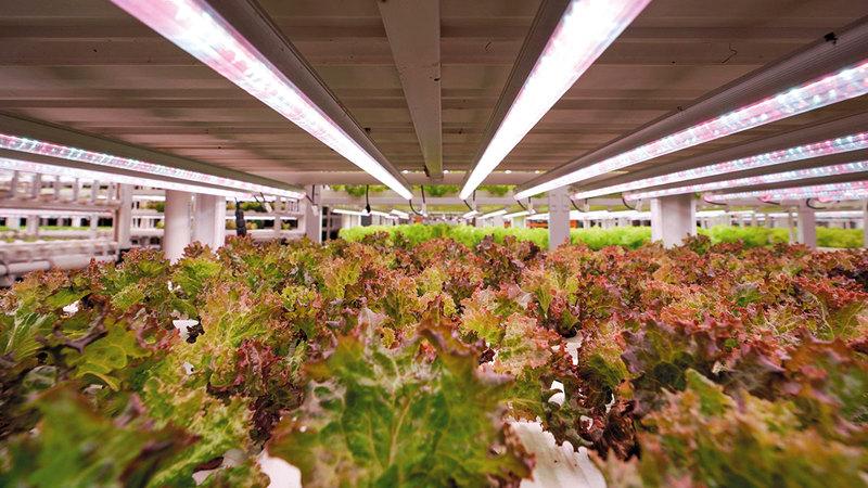 «جيب فارمز».. متخصّصة في زراعة أنواع متعددة من الخضراوات والأعشاب الورقية.   من المصدر