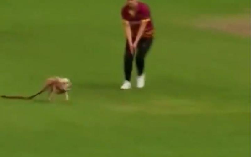 """الصورة: """"كلبة"""" تشارك في مباراة كريكيت للسيدات.. ماذا فعلت (فيديو)"""
