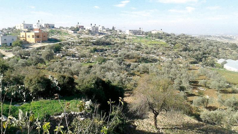 الفلسطينيون محرومون من دخول أراضيهم الزراعية.  من المصدر