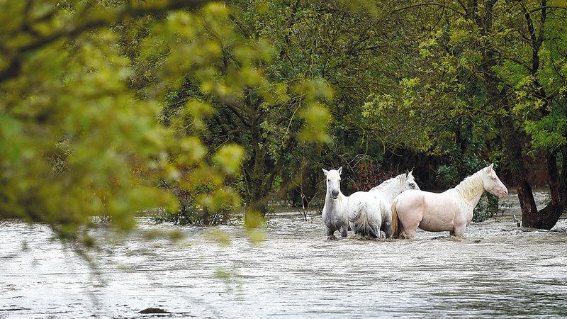 مزرعة خيول تحاصرها مياه الأمطار.    أ.ف.ب