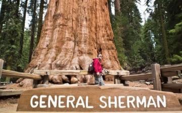 الصورة: حريق كاليفورنيا يهدد «الجنرال شيرمان».. أكبر شجرة على وجه الأرض