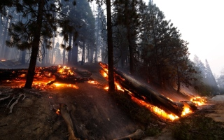 الصورة: حرائق الغابات في كاليفورنيا.. صور
