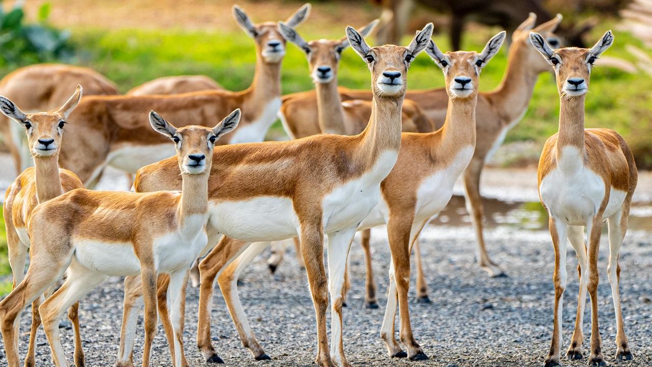 «سفاري دبي» حرصت على إعداد البيئات المطابقة للموائل الطبيعية للحيوانات. من المصدر