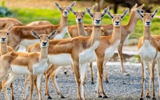 الصورة: دبي سفاري بارك تعود بموسم جديد حافل بـ«مخلوقات مذهلة»