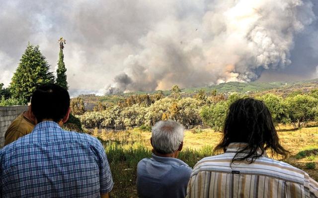 الصورة: إقليم كاتالونيا يستعين بالماعز والأغنام لمكافحة الحرائق