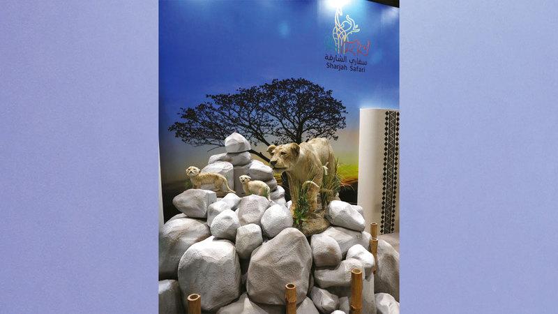 السفاري تضم أيضاً مركزاً لإكثار الحيوانات المهددة بالانقراض.  من المصدر