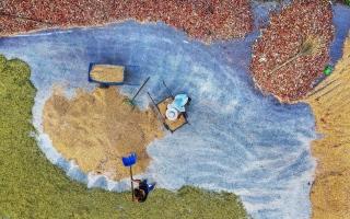 الصورة: موسم التجفيف الذهبي للذرة وفول الصويا بالصين.. صور