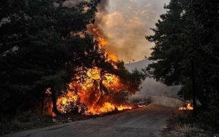 الصورة: سورية تعدم 24 شخصا أدينوا بإشعال حرائق غابات