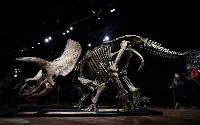 الصورة: بيع رفات الديناصور «جون الكبير» في مزاد بأكثر من 7.5 مليون دولار