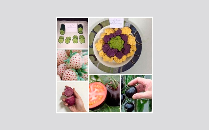 بالفيديو.. خليجي ينجح بزراعة طماطم سوداء وفراولة بيضاء