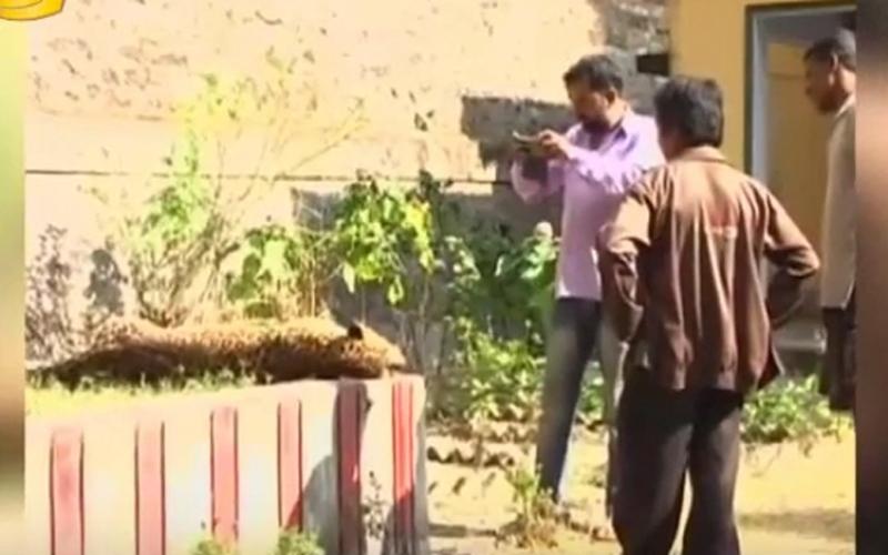 الصورة: بالفيديو.. إعدام نمر تسبب بوفاة طفلة
