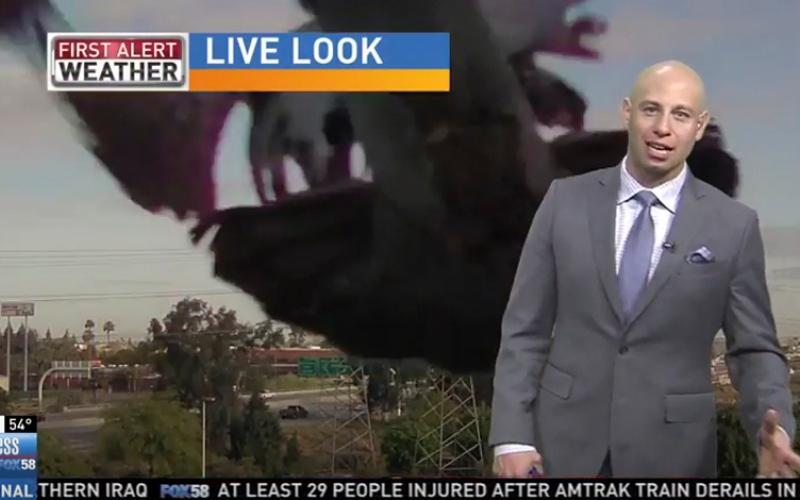 الصورة: بالفيديو.. طائر ضخم يهاجم مذيعاً على الهواء