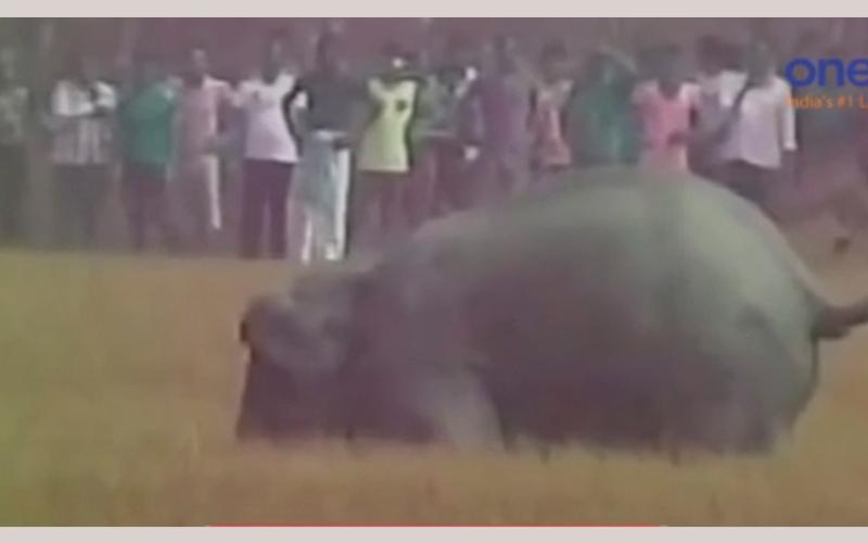بالفيديو..  فيَلة تقتل 5 أشخاص أثاروا غضبها