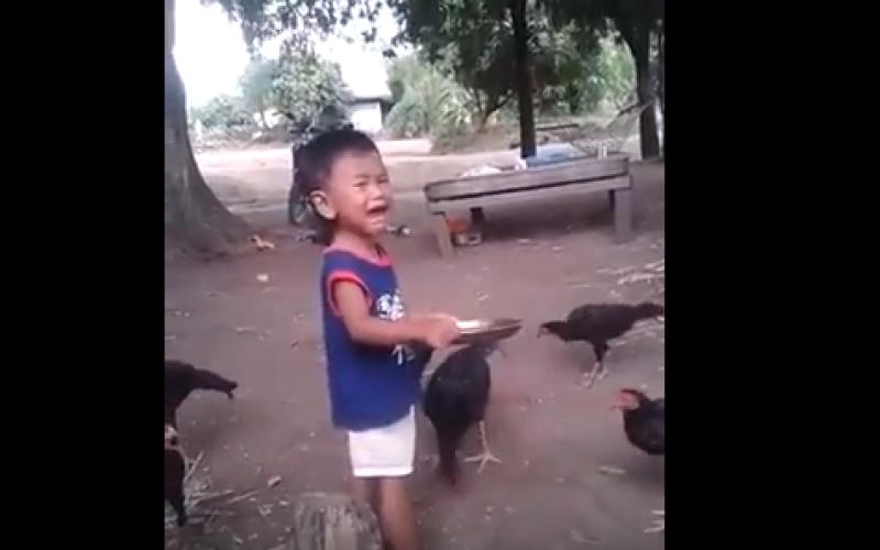 الصورة: فيديو لطيف لطفل في مشادة مع الدجاج من أجل الطعام!