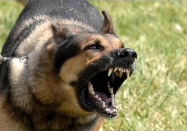 وفاة بريطانية دافعت عن كلبها - الإمارات اليوم
