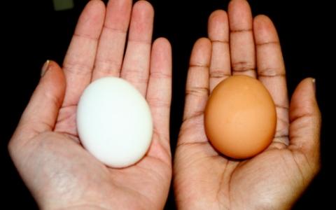 #سؤال ـ بسيط..  ما هو الفرق بين البيض الأبيض والبني؟