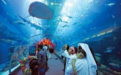 دبي.. مغامرات بحرية وسفاري مع أسماك القرش